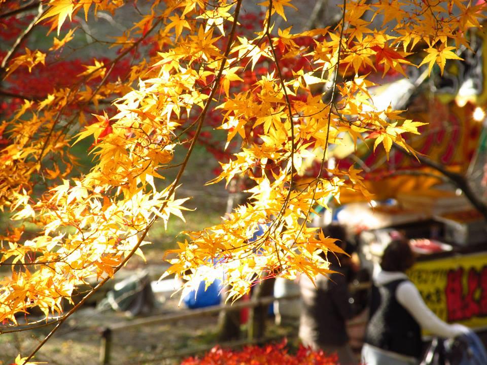 秋月の紅葉02